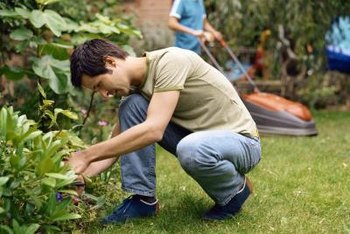 Careful inspection of landscape plants can keep you ahead of pests.