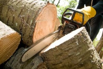 Chain saws cut through large trunks and branches.