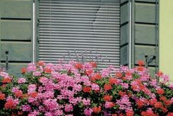 Window boxes can serve as focal points and are desirable for areas with limited space.
