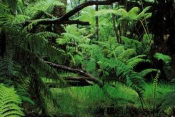 Some ferns grow well in shady moist areas.