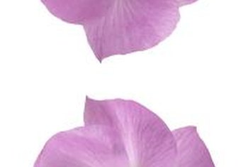 Plant lilac hibiscus for drought-proof color.