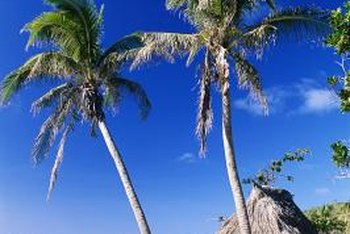 Thatched Grass And Palm Tree Decor Has A Tropical Vibe In Any Area.