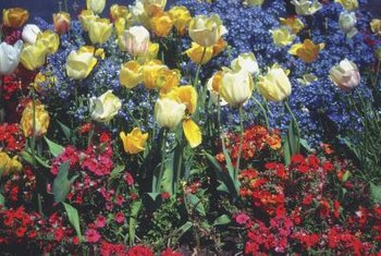 Perennials and bulbs together can enliven your garden.