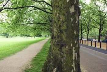 Tree root barriers are used to redirect roots away from pavements and structures.