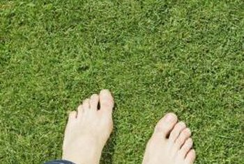 Grass with a soft, fine texture feel better on bare feet.