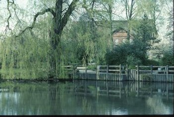 An ideal site for a weeping willow tree is next to a pond.
