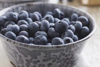 Harvested blueberries can be eaten fresh, frozen, added to recipes, or canned.