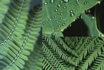 Fern fronds bear spores that propogate the plant.