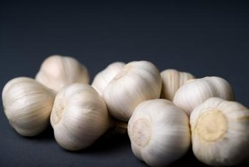 Garlic is related to chives but produces several cloves per bulb.