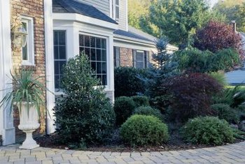 Trees and shrubs of contrasting colors, shapes and textures go a long way.