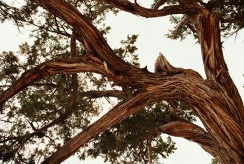 Damaged branches can land on people, houses or cars.