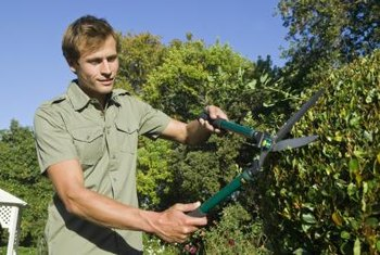 Pruning is essential to having healthy hedges.