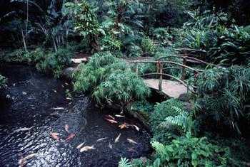 Marginal plants creep along a koi pond's edges and across its water.