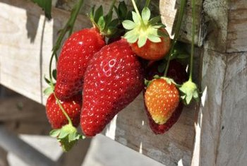Strawberries grow well in space-saving, vertical structures.