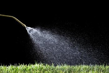 Water in lawn fertilizer immediately following application.