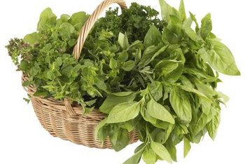 Growers in zone 10 can produce fresh herbs year-round.