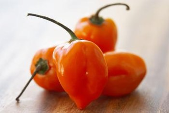 Habaneros are among the hottest peppers in the world.