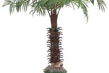 Palms That Grow No More Than 10 Feet Tall Are Ideal Container Plants