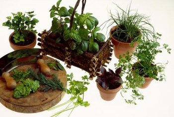 Growing fresh herb plants in or near the kitchen makes them easy to use.