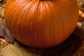Gardeners must wait months to harvest pumpkins.