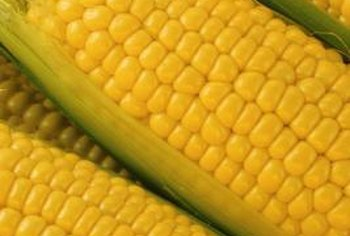 Planting different genetic varieties of sweet corn extends the harvest season.