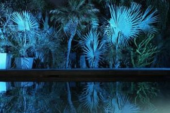 Three-dimensional plants cast an arresting reflection in a pool at night.