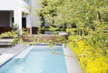 Trees chosen for pool areas should produce low levels of litter.