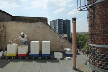 An urban beekeeper manages her bees atop her rolled asphalt roof.