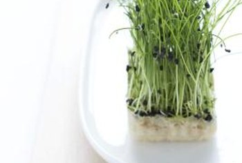 Alfalfa sprouts are allowed in moderation on the Blood Type B diet.