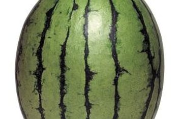 Small watermelon varieties work best for a square foot garden.