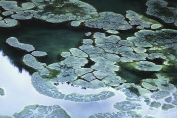 Left unchecked, algae can overtake your pond surface.