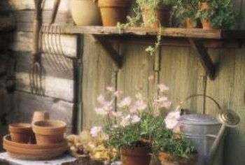 Sanitize old planter pots each year and you may be able to reuse the same pots for years.