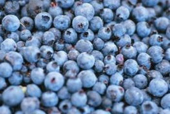 Blueberries, like azaleas and rhododendrons, thrive in acidic soil.