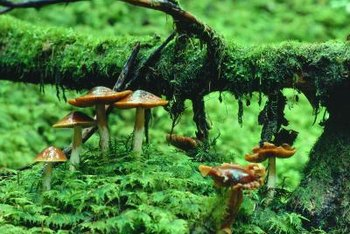Consider location and soil condition before growing moss.