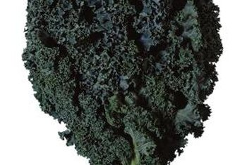 Moisture prevents kale plants from wilting.