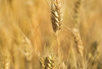 Wheat allegies are common and the side effects can be subtle.