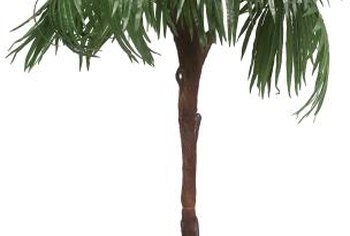 Palm trees in containers or in the garden benefit from mulch.