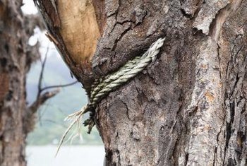 The way in which a rope is attached should allow for tree growth.