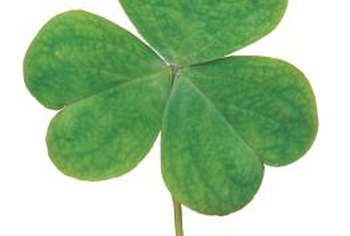 Oxalis' heart-shaped leaves look similar to clover.