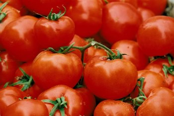 Tomatoes are among the most drought-tolerant plants.