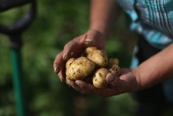 Wash your potatoes thoroughly before preparing them for a meal.