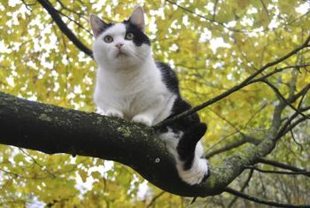 Low branches can make it easier for a cat to reach a nesting bird.