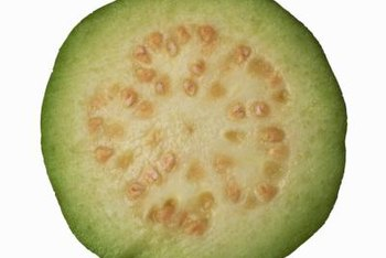 Despite the lure of their fruit, guava trees are seldom grown outside the tropics.