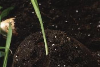 Budding plants have particular fertilizer requirements.