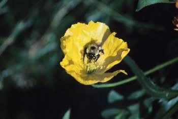 Attract bees with a pollinator-friendly yard.