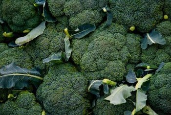 Broccoli needs to be completely green when harvested, without yellow buds.