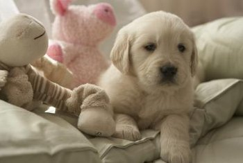 Stashing small or dangerous items away keeps them out of a puppy's reach.