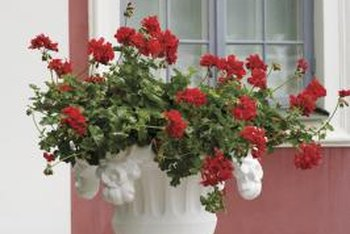 An ornate urn works best with a single type of plant.