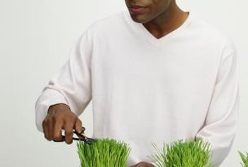 Grow grass as an indoor ornamental.