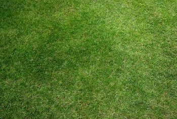 Reseed lawn to mend patchy, dead or damaged areas.